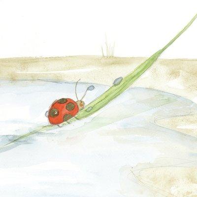 Los cuentos mágicos de zoe :3 Ladybug