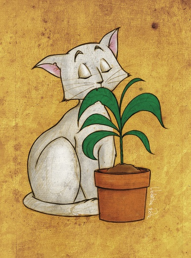 Cat chewing a plant