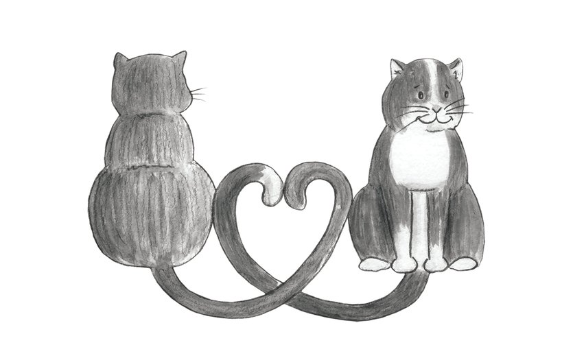 - animals, cat, cats, kitten, kittens, love, pets