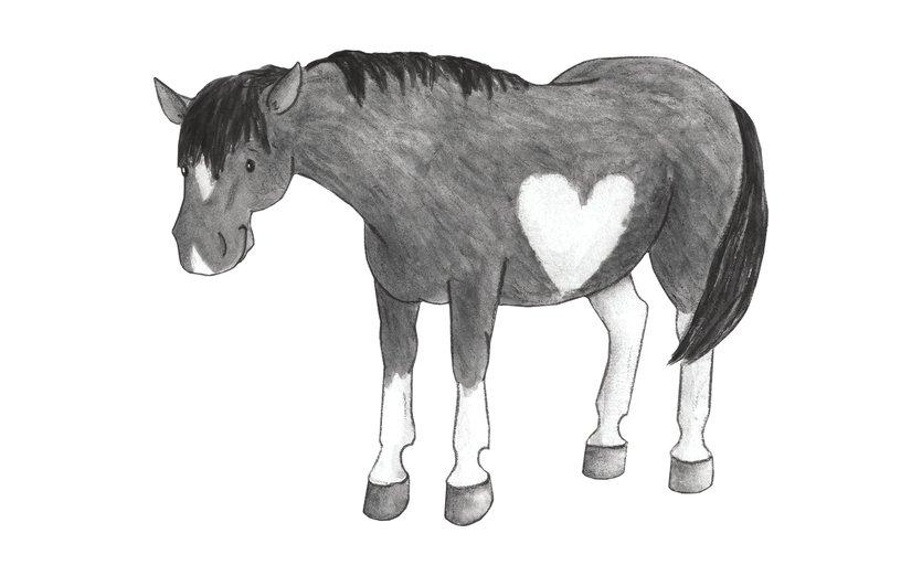 - animals, equine, farm, hearts, horse, horses, pony