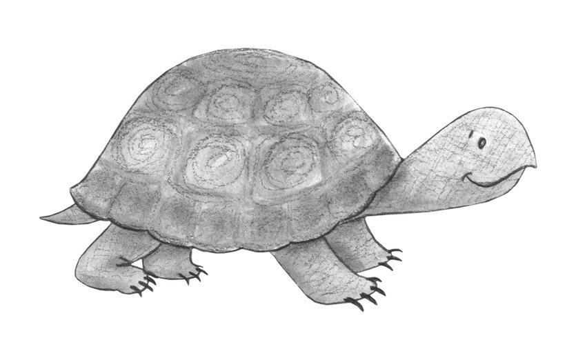 - animals, turtle