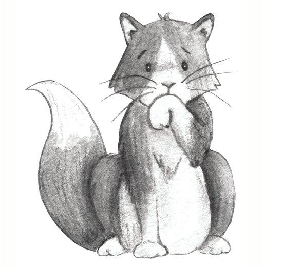 - animals, cat, kitten, kitties, pets