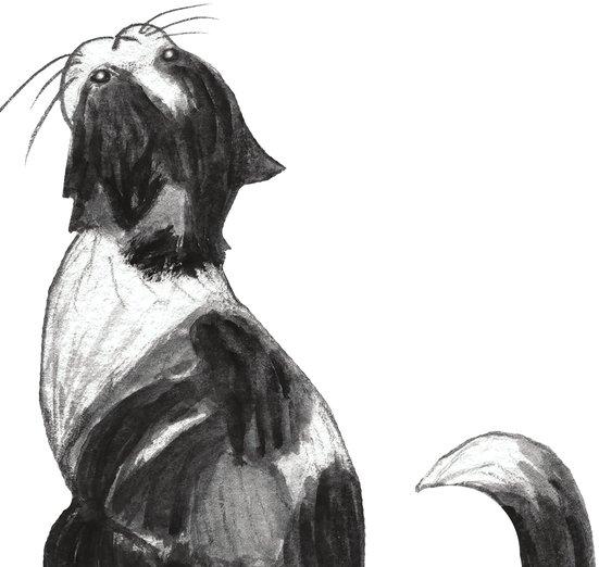 - animals, cat, cats, kitten, meow, pet, pets