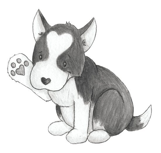 - animals, corgi, dog, dogs, paws, pets, puppy