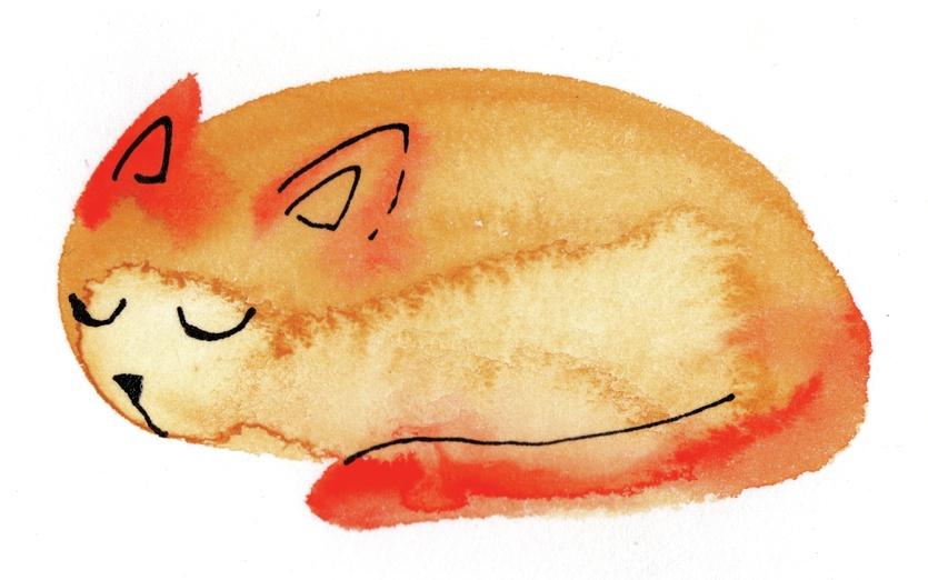 - adorable, animal, asleep, aw, cartoon, cat, cozy
