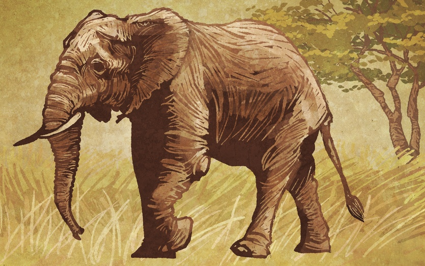 - africa, animal, animals, creatures, desert, ears, elephant