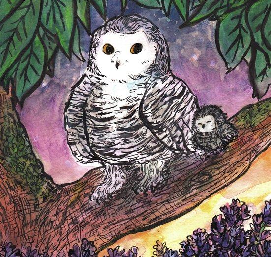 - animals, birds, evening, flowers, lavender, nature, owls