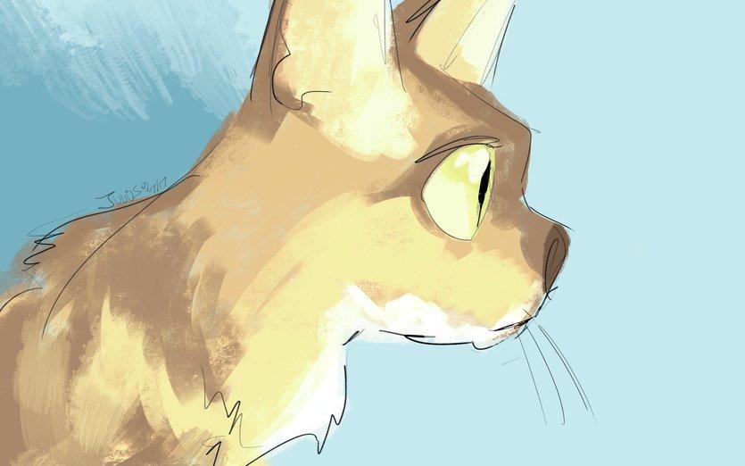 - bengal, cat, feline, femalecat, juliustan, kitten, kitty