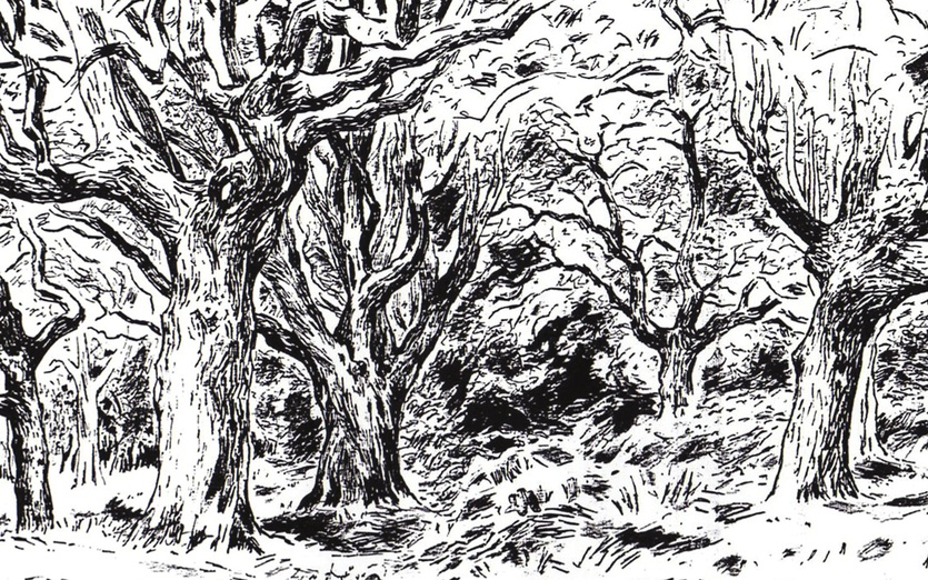 - black, branches, curious, detailed, details, drawing, flora