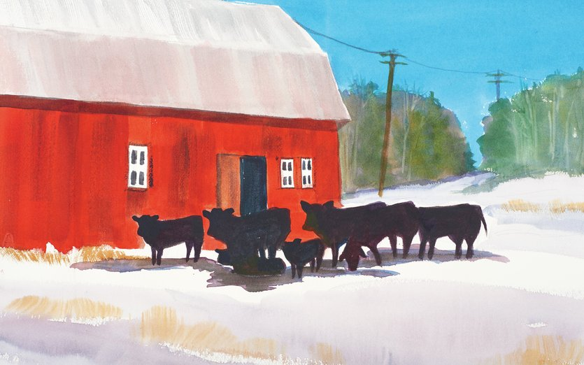 On my many trips to Iowa to visit family, I would often pull over when the light hit a scene just right. - barn, cattle, cows, dairy, family, farming, holstein
