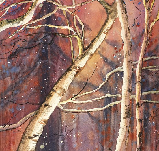 - birch, boreal, fall, forest, minnesota, north, poplar
