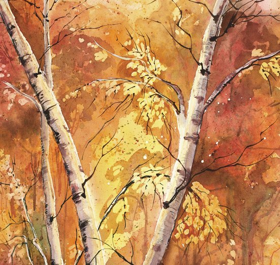 - autumn, birch, fall, forest, trees, woods