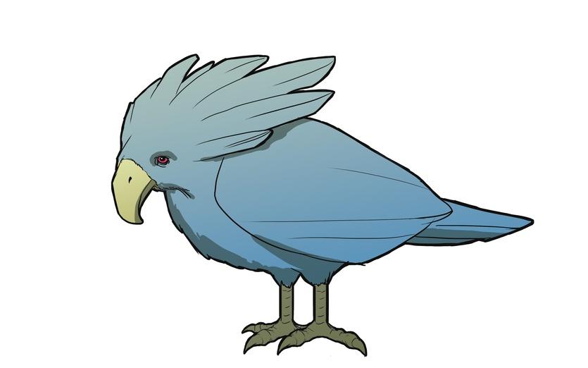 - bird, birds, feather, feathers, fly