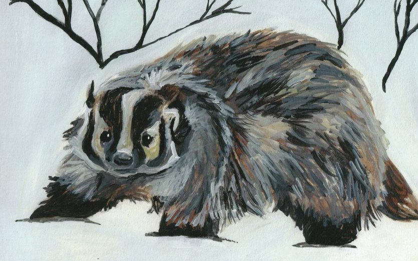 - animals, badger, forest, painting, snow, winter