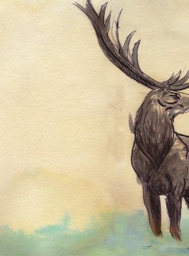 Elk Crossing River