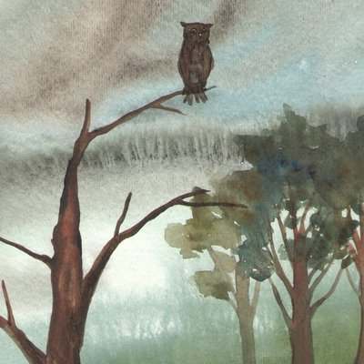 rain owl