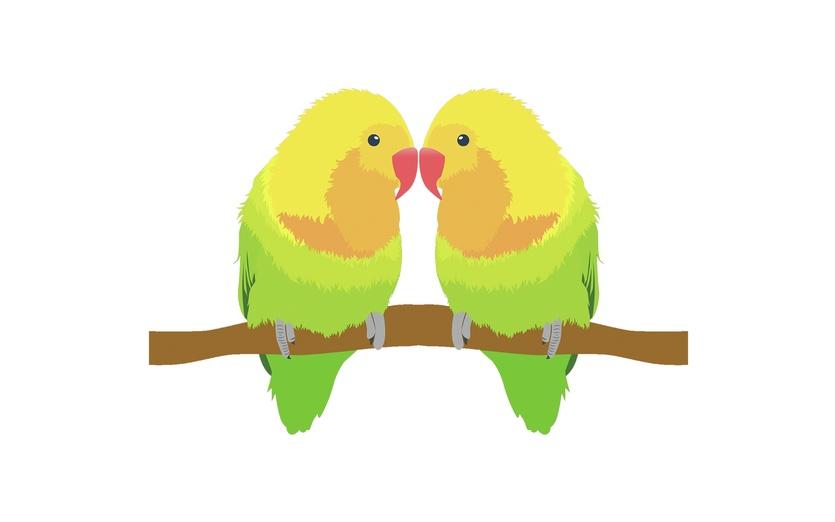 behance.net/jnjnnjenjenn instagram.com/imaginarypaperboat jnjnnjenjenn.deviantart.com - adorable, adorbs, animals, art, beaks, bird, birds