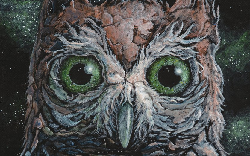 - beak, bird, black, brown, evening, eyes, feathers
