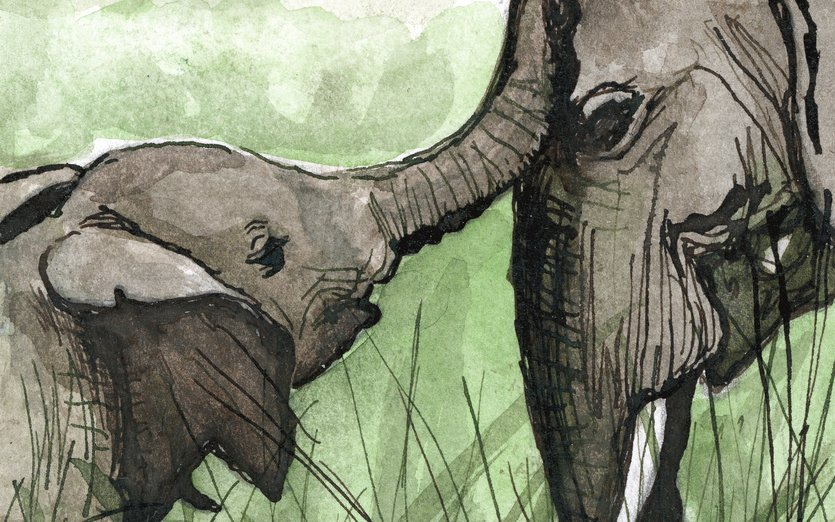original artwork: ink 4x6 inches - african, animals, baby, elephant, elephants, green, trunk