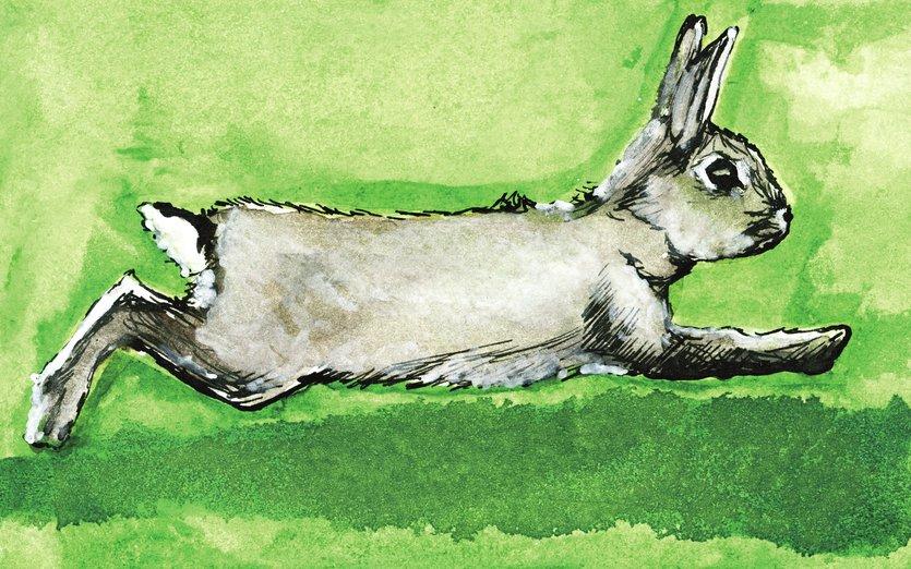 - animal, art, bunny, drawing, green, ink, rabbit