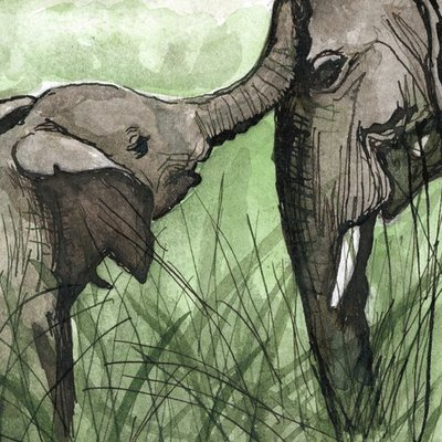Elephant Comfort