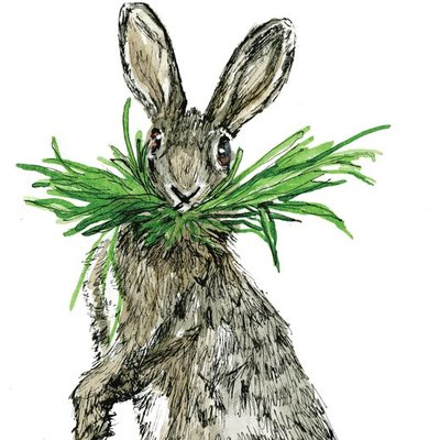 Rabbit with a mouthful of grass