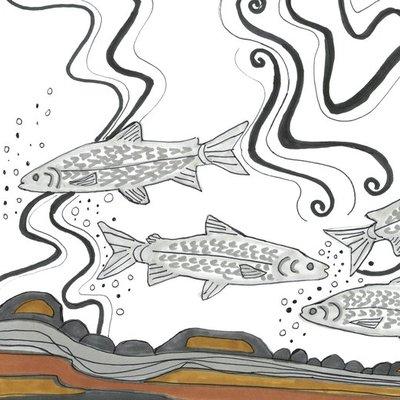 Four Whitefish