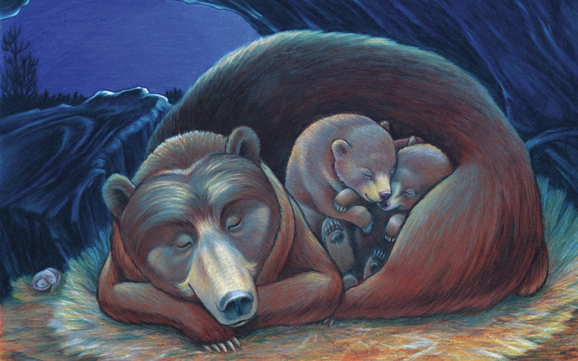 - alone, animals, asleep, bear, black, blue, brown