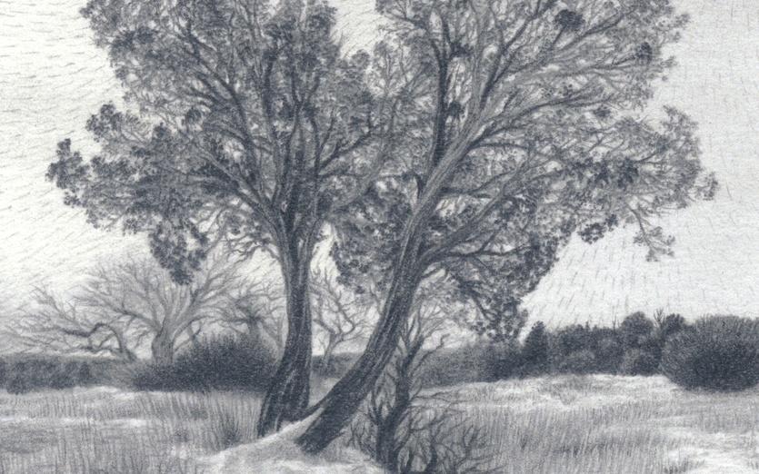 - art, bare, black, branches, bushes, chill, cold