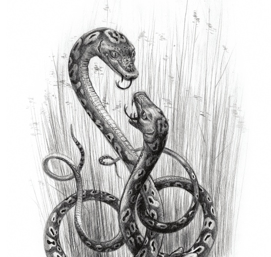 The Scitalis is a serpent from Medieval bestiaries with such marvelous markings on its back that its appearance would stun the viewer, slowing the person down so that they could be caught. Its bodily heat was so great that it shed its skin even in the winter. - aggressive, animals, black, characters, creature, determined, fierce