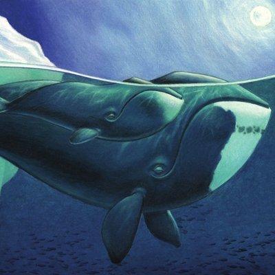 Sleepy Whales