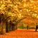 Autumn12P