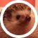 Bhedgehog