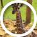 BlackGiraffe7252007