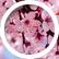 BlossomWrites210
