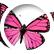 ButterflyOhMy