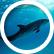DolphinLover200