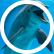 DolphinLover321