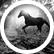 EquestrianKaelanMaria