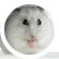 HamsterLover999