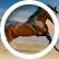 HorseMad554