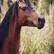 HorsePassion