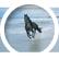 HorseQueen1012