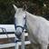 HorseWhisperer14
