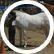 Horseblindshowgirl11