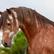 HorseyGirlHannah