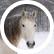Horseygirl122