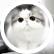I_love_kittens_37