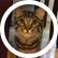 KittenWithAPen
