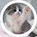 Kittiecat50005